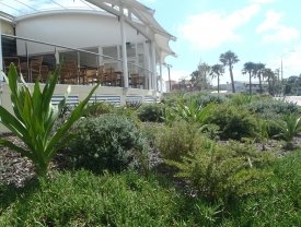 Native plants used in coastal setting to create a beautiful low maintenance garden